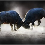 Kens-pic_buffaloes-in-conflict-1024x624