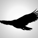 Silhouette Eagle Flying